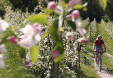 Südtirols Süden: Mountainbike- und Genusstouren im Frühling