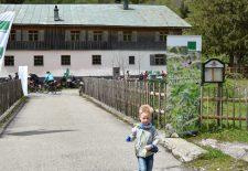 Sennalpe Mitterhaus im Retterschwanger Tal ist die erste Alpe mit zertifizierter Bioland-Gold-Gastronomie im Allgäu